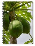 Gigantic Papaya Spiral Notebook