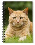 Ginger Cat In Garden Spiral Notebook