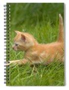 Ginger Tabby Kitten Spiral Notebook