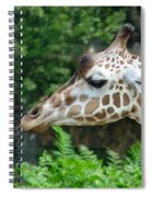 Giraffe-09028 Spiral Notebook
