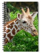 Giraffe-09034 Spiral Notebook