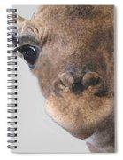 Giraffe Baby Spiral Notebook
