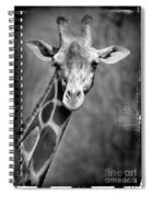 Giraffe Face In Black And White Spiral Notebook
