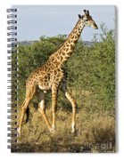 Giraffe From Tanzania Spiral Notebook