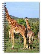Giraffe Group On The Masai Mara Spiral Notebook