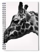 Giraffe Head Shot Spiral Notebook