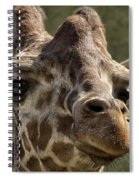 Giraffe Hey Are You Looking At Me Spiral Notebook