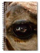 Giraffe Look Into My Eye Spiral Notebook