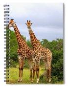Giraffe Males Before The Storm Spiral Notebook