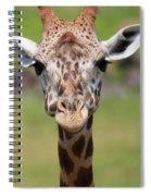 Giraffe Peek A Boo Poster Spiral Notebook