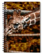 Giraffe Showing His 20 Inch Tongue Spiral Notebook
