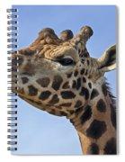 Giraffes 3 Spiral Notebook