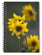 Give Me Sun Spiral Notebook