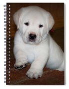 Give Me Your Paw Spiral Notebook