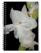 Gladiolus Past Time Spiral Notebook