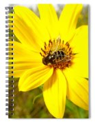 Glass Wings Spiral Notebook