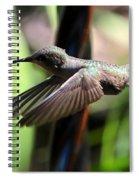 Gliding Hummingbird Spiral Notebook