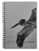 Gliding Pelican In Black And White Spiral Notebook