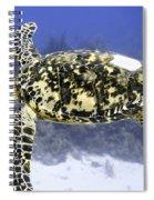 Gliding Sea Turtle Spiral Notebook