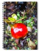Glistening Wet Rose Hip Spiral Notebook