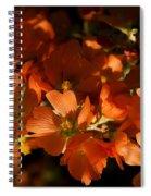 Globe-mallow Blooms  Spiral Notebook