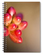 Globules Of Sedum 1 Spiral Notebook