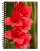 Glorious Glads Spiral Notebook