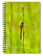 Glorious Golden-winged Spiral Notebook