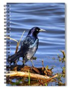 Glorious Grackle Spiral Notebook