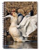 Glorious Snow Goose Spiral Notebook