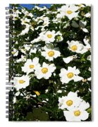 Glorious White Roses Db Spiral Notebook