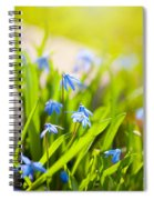 Scilla Siberica Flowerets Named Wood Squill  Spiral Notebook