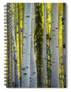Glowing Aspens Spiral Notebook