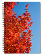 Glowing Fall Maple Colors 1 Spiral Notebook