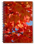 Glowing Fall Maple Colors 3 Spiral Notebook