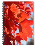 Glowing Fall Maple Colors 4 Spiral Notebook