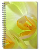Glowing Orchid - Lemon And Lime Spiral Notebook