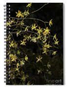 Glowing Orchids Spiral Notebook