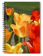 Glowing Sunlit Tulips Art Prints Red Yellow Orange Spiral Notebook