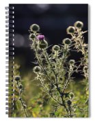 Glowing Thistle - 1 Spiral Notebook