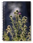 Glowing Thistle - 3 Spiral Notebook