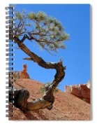 Gnarled Pine In Bryce Canyon Utah Spiral Notebook