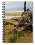 Gnarly Tree Spiral Notebook