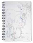 Goat Drawing Spiral Notebook