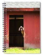 Goat In Barn Spiral Notebook
