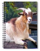 Goat On The Roof Spiral Notebook