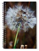 Goats Beard Seed Head Spiral Notebook