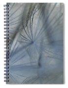 Goat's Beard Seed Macro Spiral Notebook