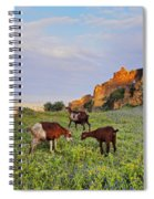 Goats In Fes Spiral Notebook
