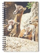 Goats On A Rock Spiral Notebook